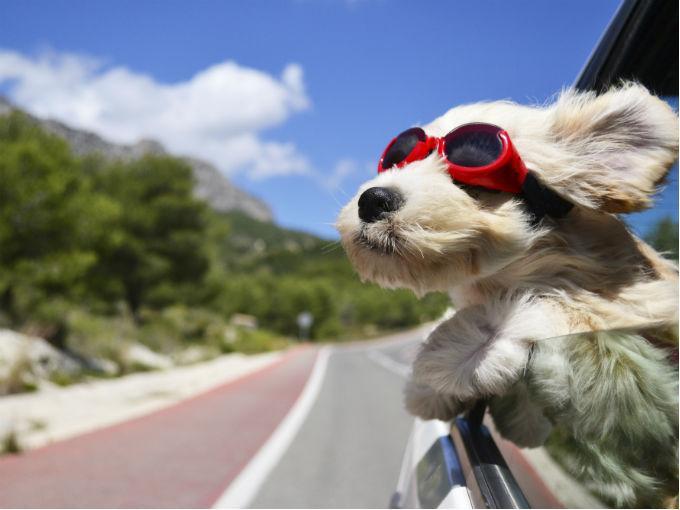 Consejos para viajar seguro con tu mascota